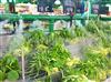 超市蔬菜保鲜喷雾加湿设备