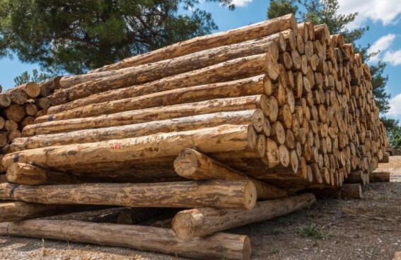 加纳将成首个获向欧洲市场出口木材许可的非洲国家